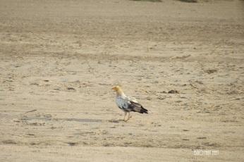 Bird Spotting at National Chambal Sanctuary
