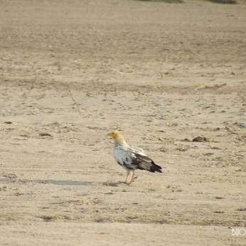 Bird Spotting at National Chambal Sanctuary