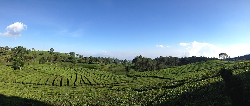 tea-valley-1555517_960_720