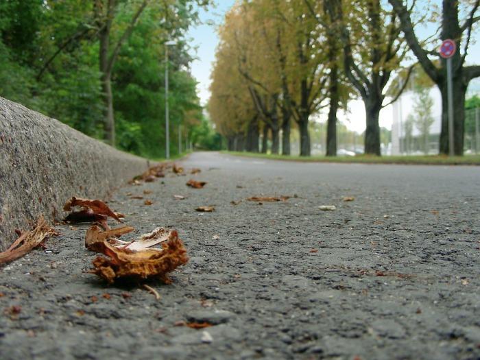 road-193659_960_720